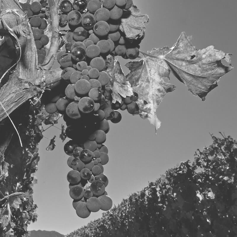 grupo-vitivinicola